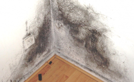 Ecor Pro dehumidifiers solve mold problems
