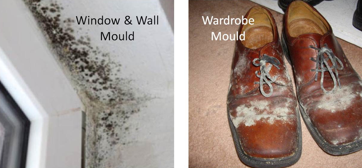 mould everywhere
