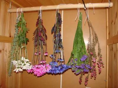 ecor pro drying flowers